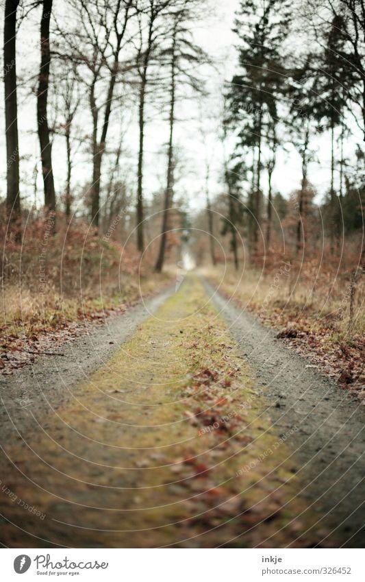 Waldweg Umwelt Natur Herbst Baum Gras Moos Park Wege & Pfade Fußweg Fluchtpunkt Farbfoto Außenaufnahme Menschenleer Tag Licht Schatten Kontrast