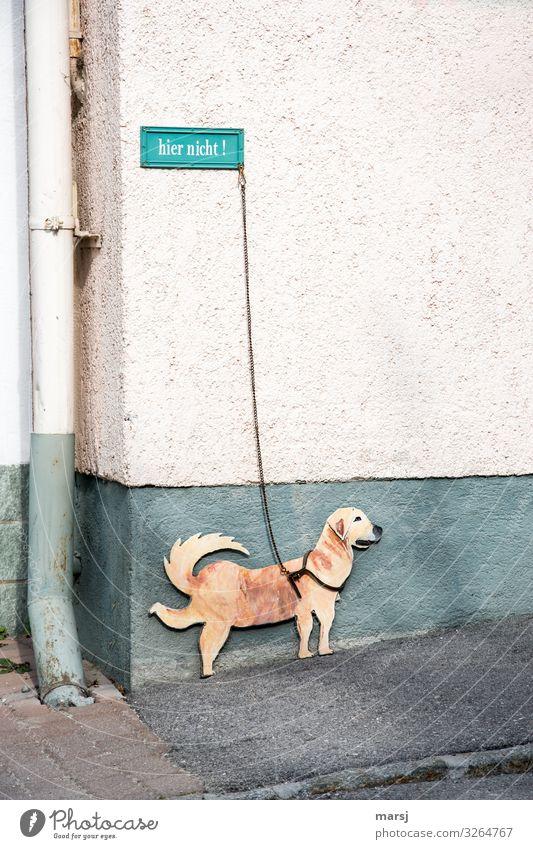 Nein wirklich nicht! Hund Tier Fassade Schilder & Markierungen Hinweisschild Bürgersteig türkis Verbote Hundeleine Warnschild Dachrinne Verbotsschild