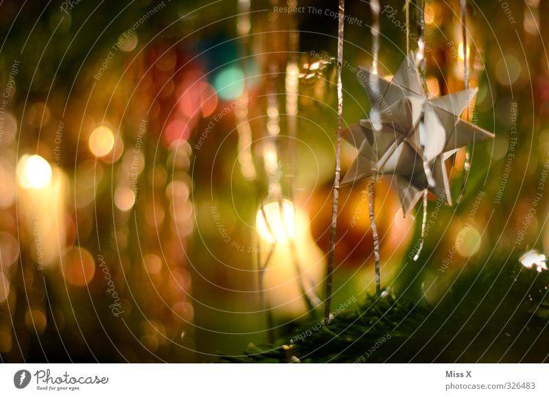Fröbelstern Weihnachten & Advent leuchten glänzend Stern (Symbol) Papier Papierstern Weihnachtsdekoration Weihnachtsbeleuchtung Weihnachtsbaum Tannenzweig
