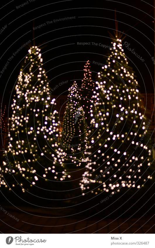 Weihnachtsunschärfe Weihnachten & Advent Winter Baum leuchten Weihnachtsbaum Weihnachtsdekoration Lichtermeer Lichterkette Tanne Farbfoto mehrfarbig