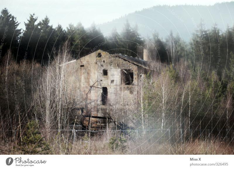 Zoomansicht RECHTES FENSTER ;-) Haus Wald dunkel Tod Herbst Stimmung Fassade Nebel bedrohlich Vergänglichkeit verfallen Vergangenheit Verfall Ende gruselig