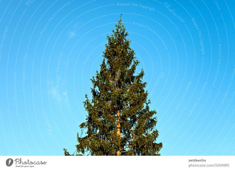 Weihnachtsbaum Weihnachten & Advent Menschenleer Nadelbaum Textfreiraum Anti-Weihnachten nordmanntanne Tanne Himmel Himmel (Jenseits)