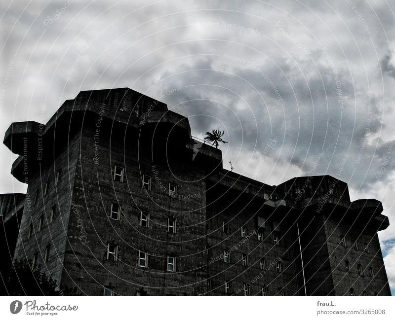 Palme Natur Grünpflanze Topfpflanze exotisch Hamburg Stadt Menschenleer Bauwerk Gebäude Hochbunker Aggression gigantisch groß grau Hoffnung gefährlich Respekt