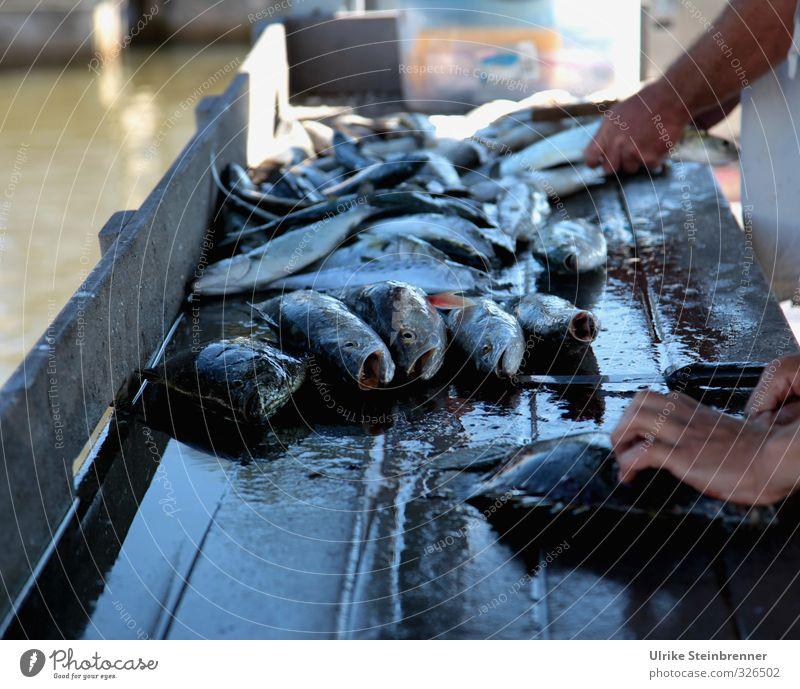 End of Day Mensch Ferien & Urlaub & Reisen blau Hand Tier Tod Frühling Küste liegen Lebensmittel Wildtier Tourismus Finger Tiergruppe Fisch