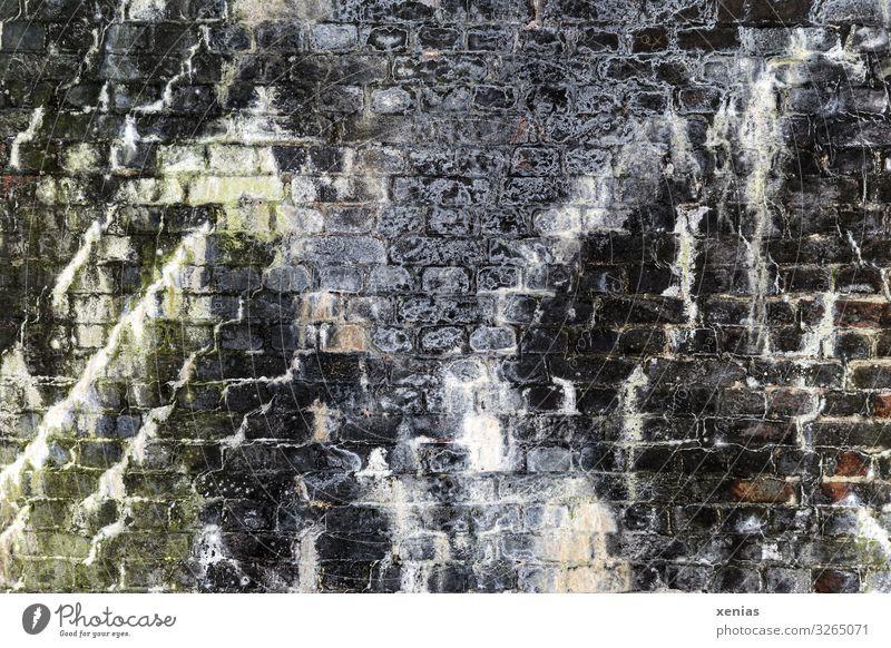 alte steinige Mauer mit Flechten Moos Menschenleer Tunnel Gebäude Wand Stein schleimig grau grün weiß Steinmauer gemauert Ruine verfallen Xenias Farbfoto
