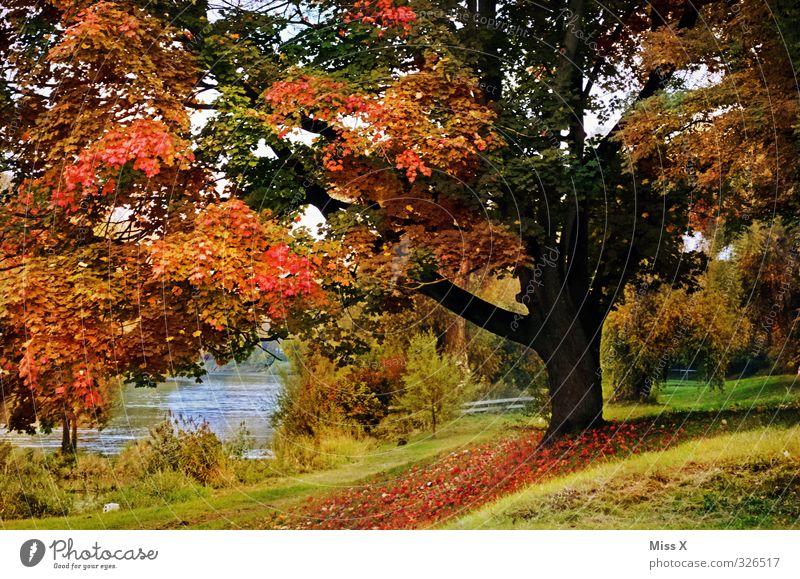 Herbstlich Erholung ruhig Natur Schönes Wetter Baum Park Stimmung Farbe Idylle Vergänglichkeit Herbstlaub herbstlich Herbstfärbung Herbstlandschaft Flussufer
