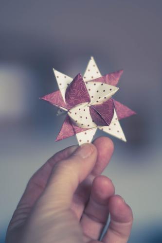 Holding a star in your hands Mensch Hand 1 violett weiß Weihnachten & Advent Stern (Symbol) Basteln Vorfreude Weihnachtsstern Dekoration & Verzierung Freude