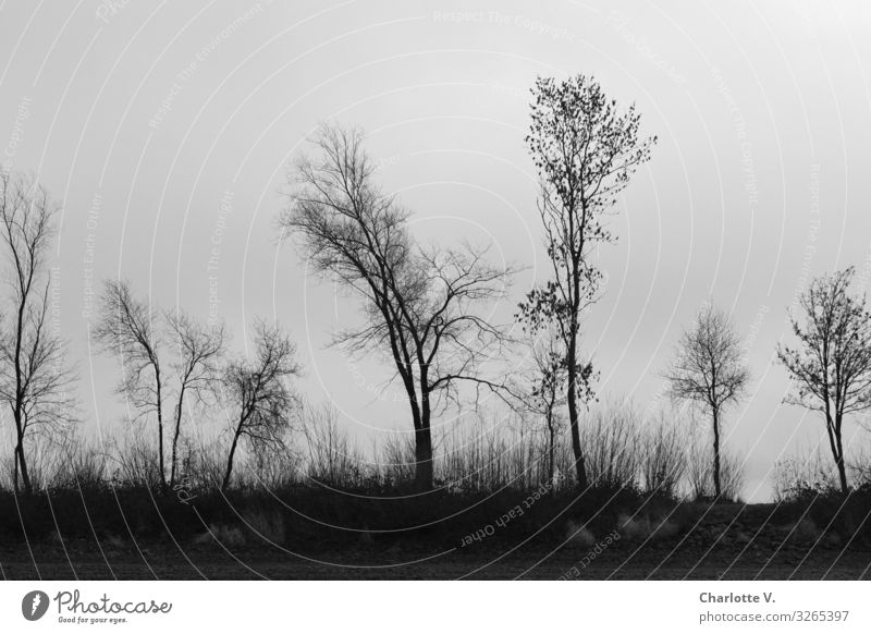 Grau in Grau Natur Pflanze Landschaft Baum ruhig Winter dunkel schwarz Holz Umwelt Traurigkeit Tod grau Stimmung elegant ästhetisch