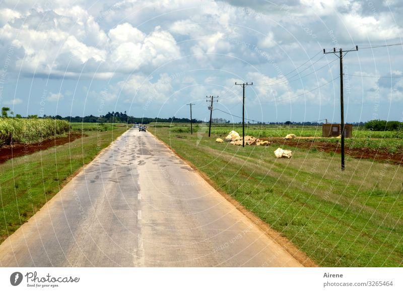 kein Ende in Sicht Landwirtschaft Forstwirtschaft Ackerbau Landschaft Himmel Wolken Zuckerrohrplantage Feld Ebene Kuba Verkehrswege Autofahren Straße PKW