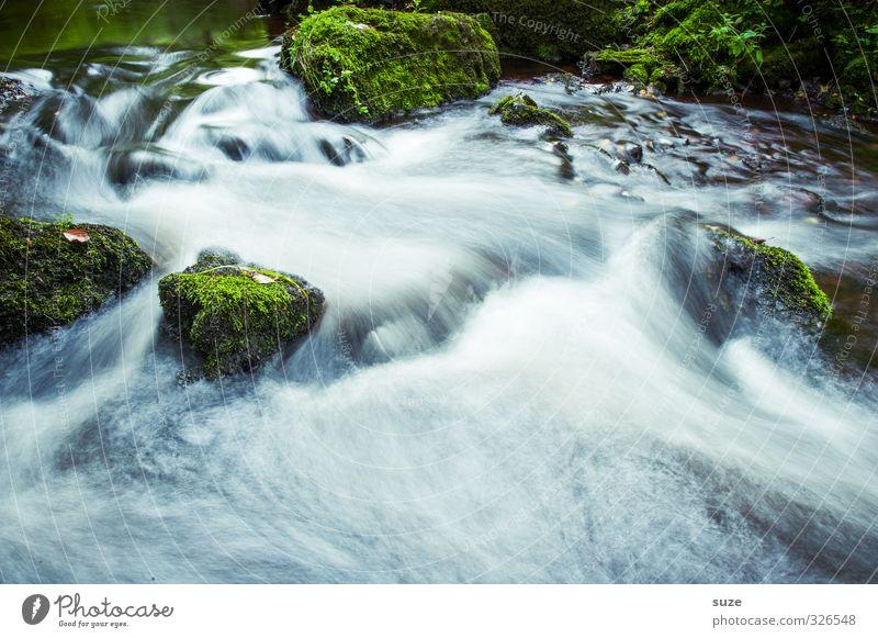 Reißender Fluß Umwelt Natur Landschaft Pflanze Urelemente Wasser Moos Felsen Flussufer Oase Stein Wachstum fantastisch frisch nachhaltig nass natürlich