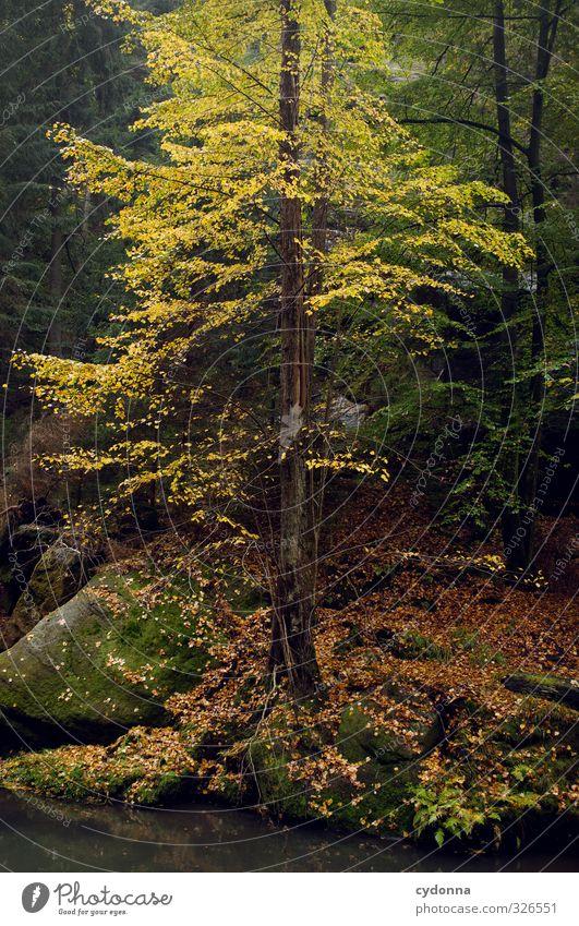 Blattgelb Ausflug Abenteuer wandern Umwelt Natur Herbst Baum Wald Felsen Flussufer Bach ästhetisch einzigartig Erfahrung Farbe geheimnisvoll Idylle Leben ruhig