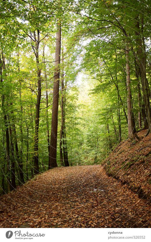 Im Grünen Natur Ferien & Urlaub & Reisen grün Baum Erholung Einsamkeit Landschaft ruhig Blatt Wald Umwelt Leben Herbst Wege & Pfade Freiheit Zeit