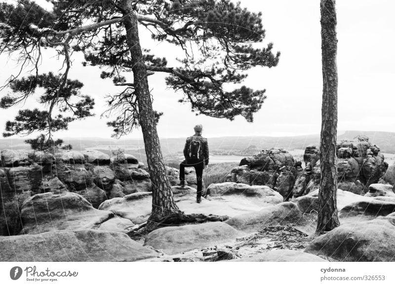 Aussicht genießen Mensch Natur Ferien & Urlaub & Reisen Jugendliche Baum Erholung Landschaft ruhig 18-30 Jahre Junger Mann Ferne Umwelt Erwachsene