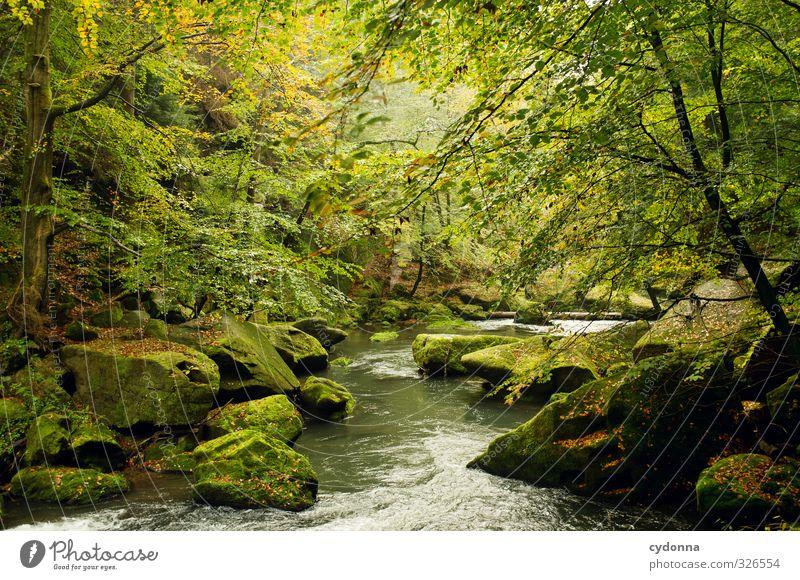 Fototapete Natur Ferien & Urlaub & Reisen grün Wasser Baum Erholung Einsamkeit Landschaft ruhig Wald Umwelt Leben Herbst Bewegung Zeit Felsen
