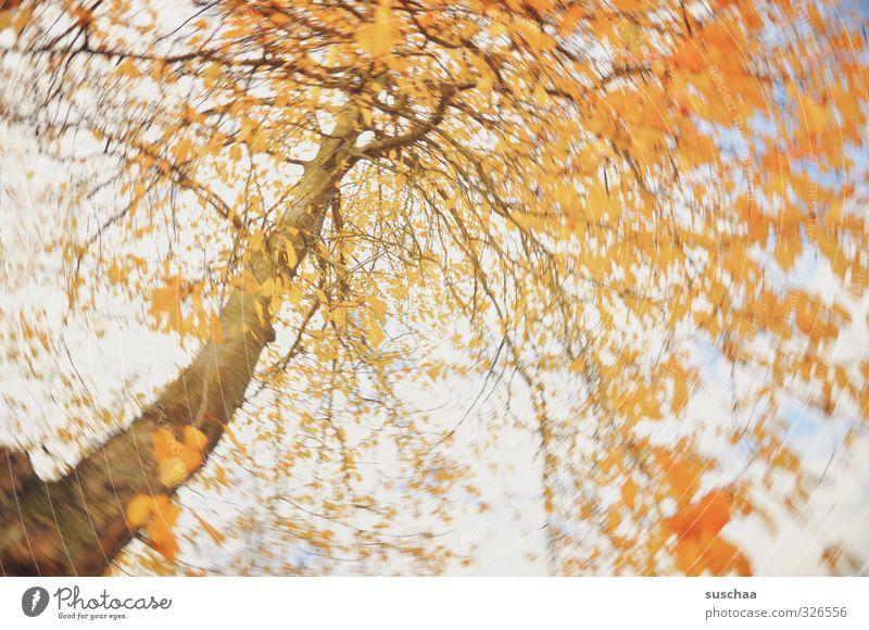 zur feier des tages .. Kunst Natur Herbst Klima Wind Baum Blatt Holz orange Bewegung Kreativität Wirbel rotieren Dynamik Farbfoto mehrfarbig Außenaufnahme