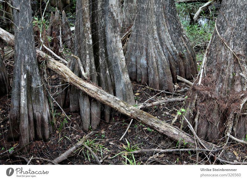 Kommen und gehen Natur Ferien & Urlaub & Reisen alt Wasser Pflanze Baum Landschaft Blatt Umwelt Ferne dunkel Frühling grau natürlich Wachstum Tourismus