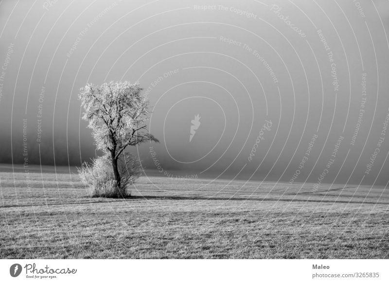 Winterlandschaft mit einem Baum Hintergrundbild schön Zweig hell Klarheit deutlich Klima kalt Landschaft bedeckt bedecken Morgendämmerung Tag Dezember Feld