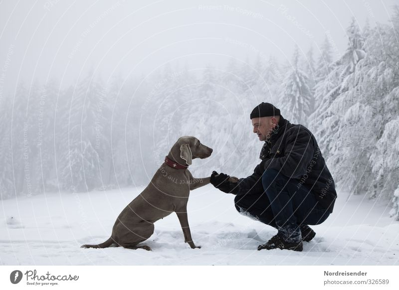 Tier | Mensch Hund Mann Erholung ruhig Winter Wald Erwachsene Leben Schnee Freundschaft Kraft Klima wandern 45-60 Jahre Ausflug