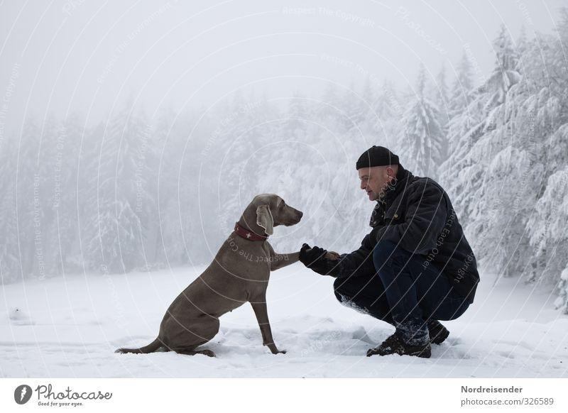 Tier | Mensch Leben harmonisch Sinnesorgane Erholung ruhig Meditation Ausflug Winter Schnee wandern Mann Erwachsene 45-60 Jahre Klima Wald Hund Fitness knien