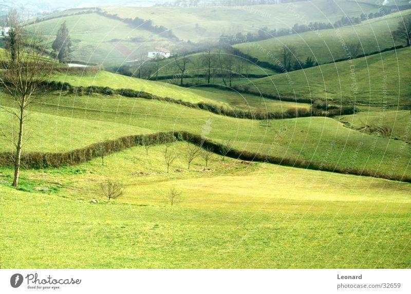 Nebelhafter Hügel Baum grün Haus Wiese Feld