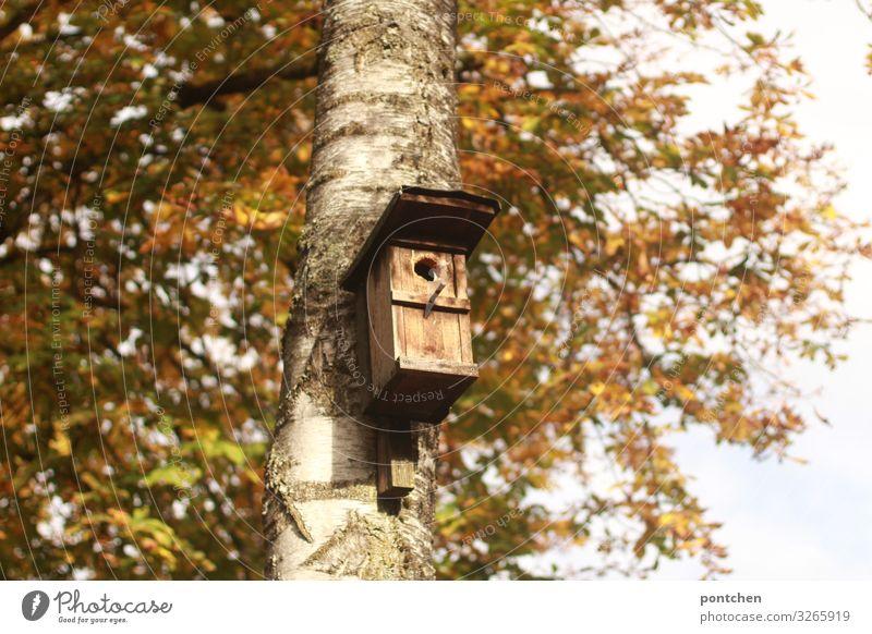 Vogelhaus hängt am Baum im Herbst Umwelt Natur Sträucher Blatt Garten Park Holz Verantwortung achtsam ruhig Futterhäuschen Birke Schutz Sicherheit Haus