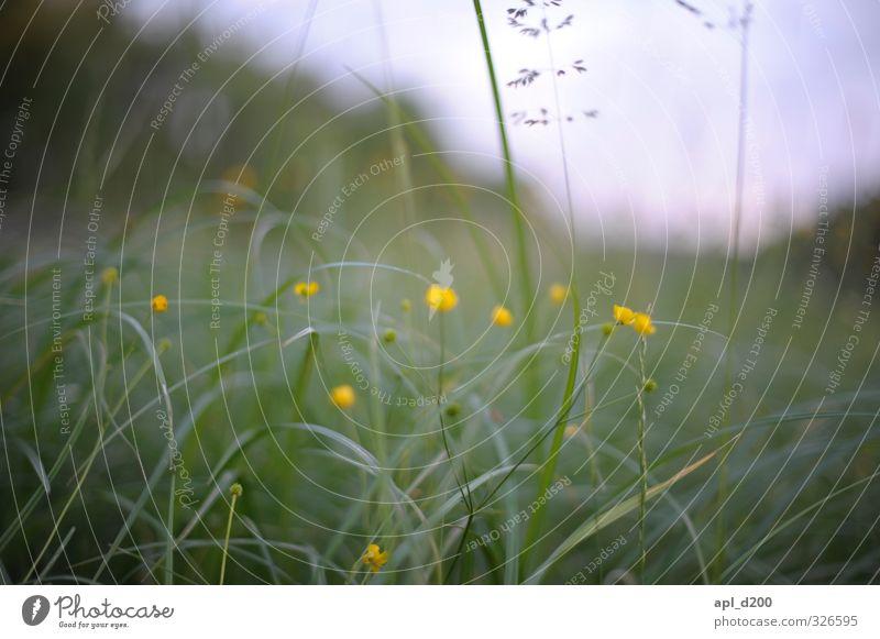 Wahrnehmung Ferien & Urlaub & Reisen Umwelt Natur Landschaft Pflanze Tier Blume Gras Sträucher stehen authentisch schön gelb grün Zufriedenheit ästhetisch