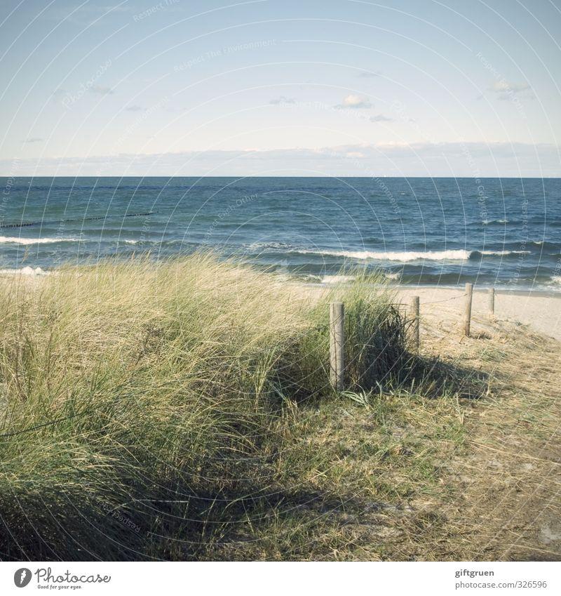 tag am meer Umwelt Natur Landschaft Urelemente Sand Wasser Himmel Sonne Sommer Klima Wetter Schönes Wetter Pflanze Gras Grünpflanze Wellen Küste Strand Ostsee
