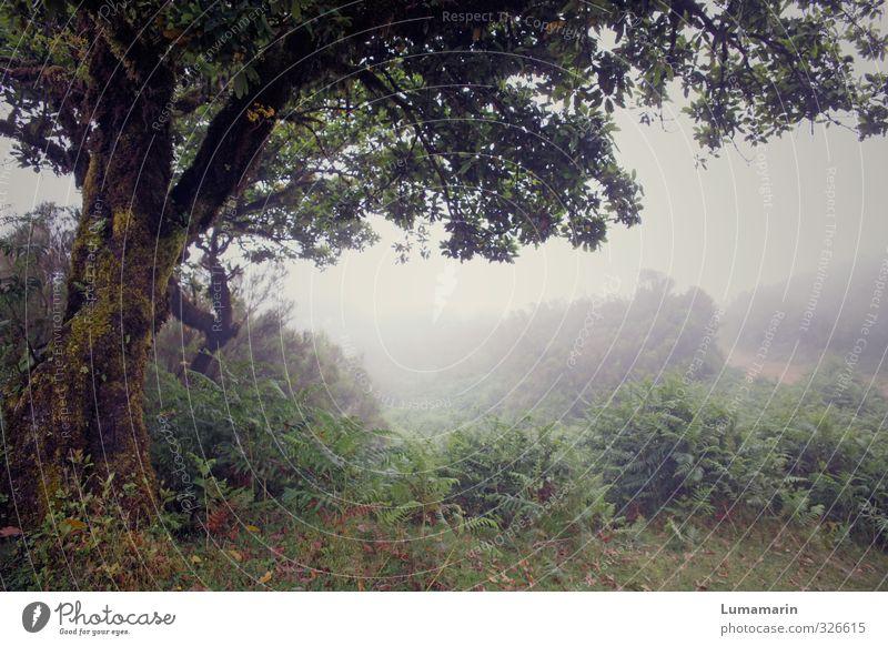 Lebensgeister Natur Landschaft Pflanze schlechtes Wetter Nebel Baum Farn kalt trist Stimmung Kraft trösten ruhig Traurigkeit Einsamkeit geheimnisvoll Hoffnung