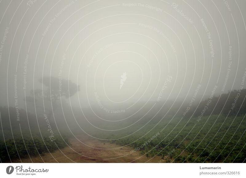be for real Natur Landschaft Pflanze schlechtes Wetter Nebel Baum Sträucher dunkel Ferne gruselig natürlich schön Stimmung Sehnsucht Einsamkeit ungewiss
