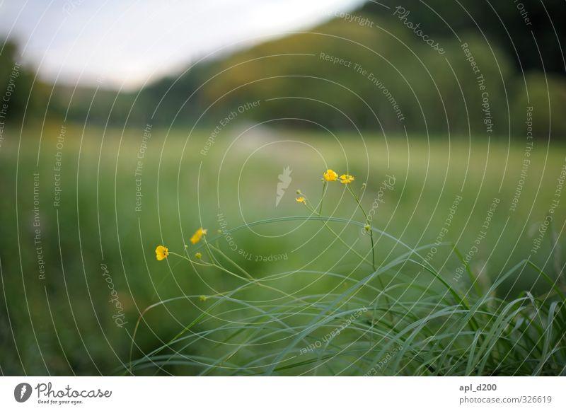 Farbtupfer Himmel Natur grün Pflanze Landschaft Tier Blatt gelb Umwelt Wiese Blüte natürlich Kraft Zufriedenheit leuchten ästhetisch