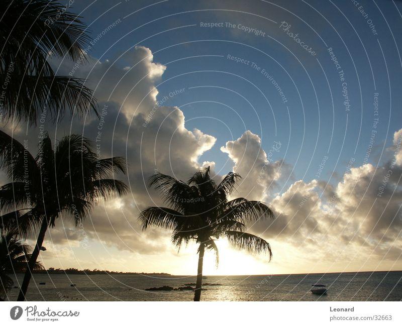 Sonnenuntergang Himmel Baum Sonne Meer Strand Wolken Wasserfahrzeug Horizont