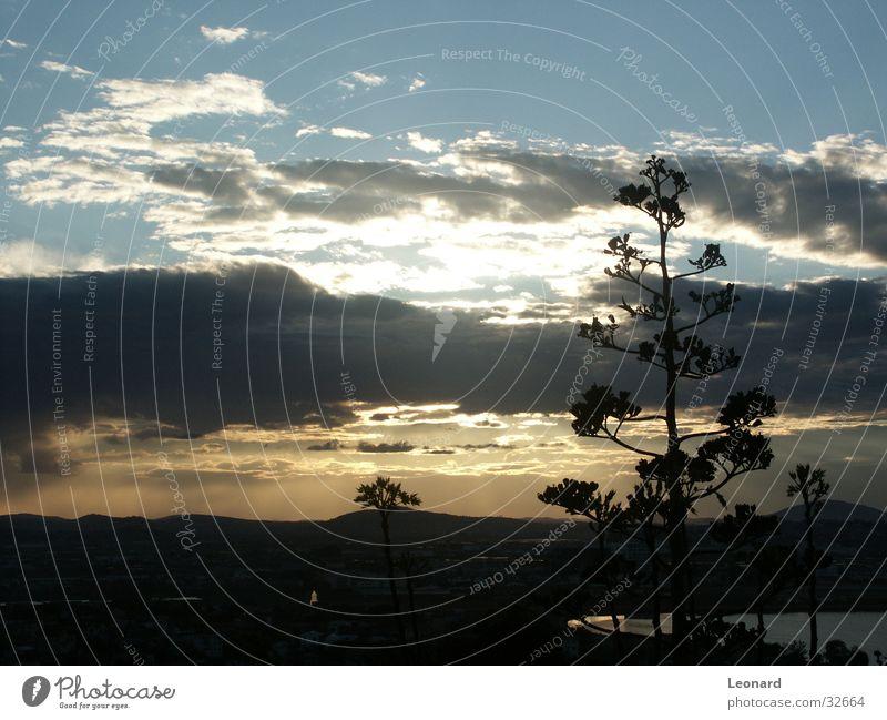 Sonnenuntergang in Antananarivo Baum See Wolken Horizont Himmel Berge u. Gebirge Silhouette