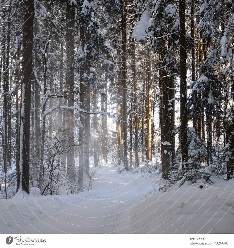 freiluftdusche Landschaft Urelemente Winter Eis Frost Schnee Schneefall Wald frisch Gesundheit kalt nass natürlich weiß Allgäu Wege & Pfade Fußweg Stranddusche