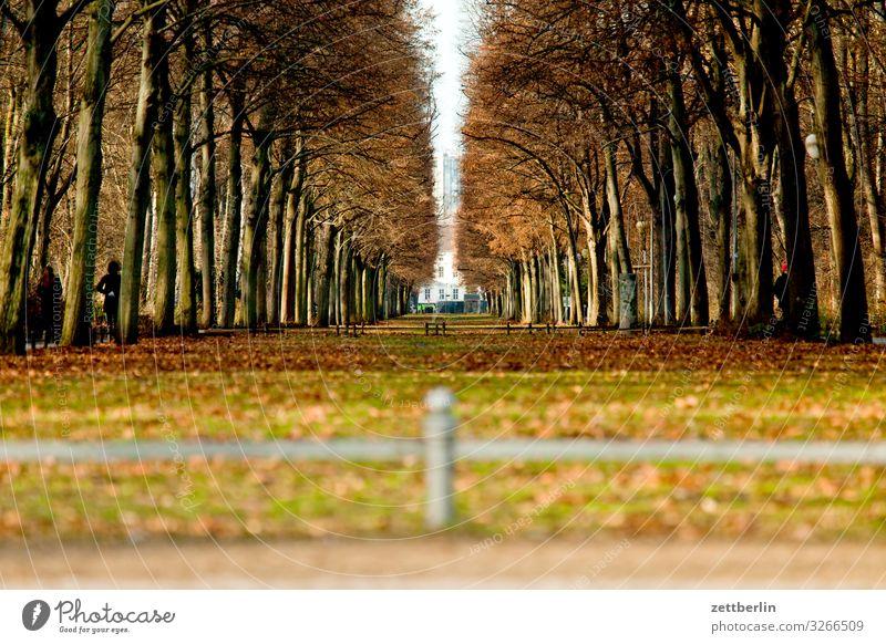 Großer Tiergarten Allee Schloss Bellevue Berlin Charlottenburg Herbstfärbung Herbstwald Park Präsident Regierung Regierungssitz Regierungspalast Wald