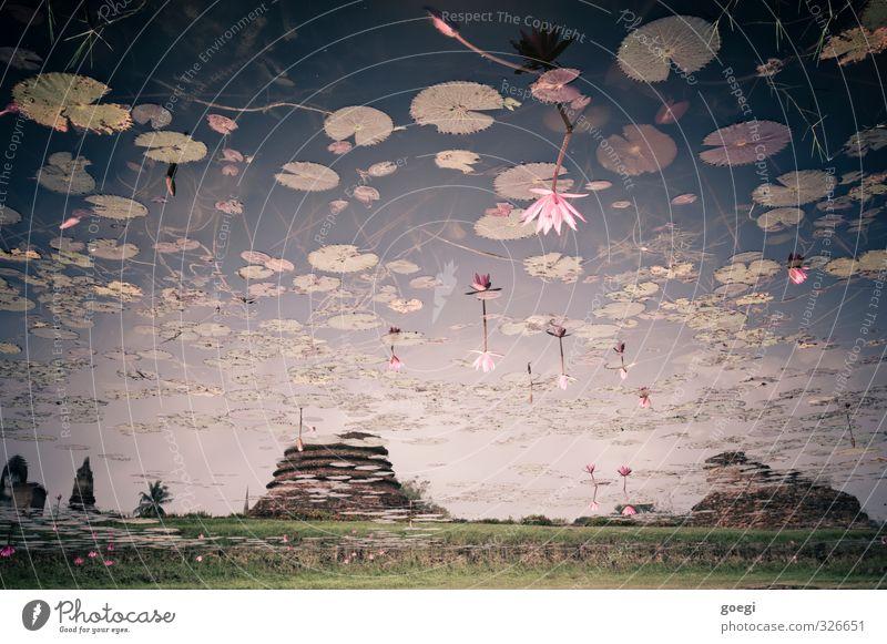 Seerosenteich Umwelt Natur Landschaft Wasser Himmel Pflanze Blatt Wildpflanze Seerosenblatt Park Tempelruine ästhetisch außergewöhnlich exotisch fantastisch