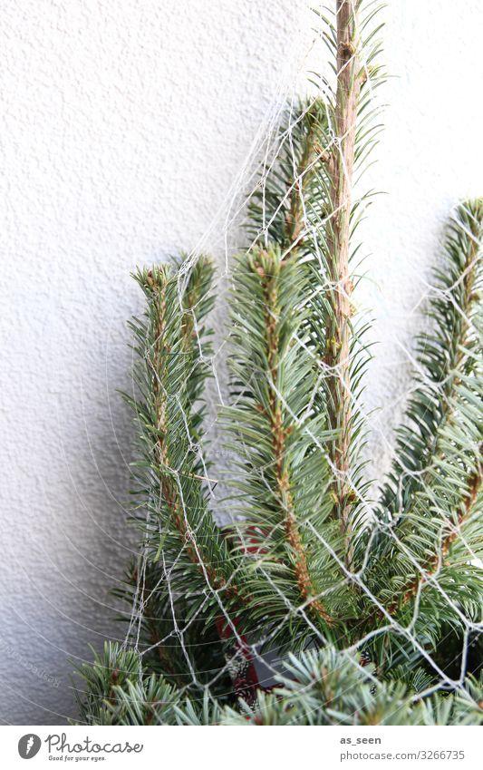 Oh Tannenbaum Weihnachten & Advent Umwelt Natur Winter Pflanze Baum Fichte Tannenzweig Tannennadel Zeichen Weihnachtsbaum stehen warten authentisch frisch