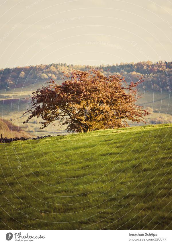 britische Landschaft I Natur Baum Umwelt Herbst Gras Idylle Schönes Wetter leer ästhetisch Mitte England Berghang Grünpflanze Englisch Großbritannien