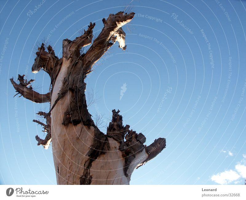 Stamm Himmel Baum Pflanze Wolken Baumstamm Baumrinde Farbton