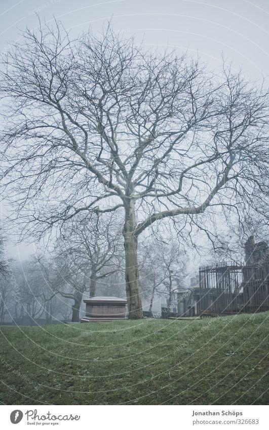 Glasgow fog VIII alt Baum dunkel kalt Tod grau Park Nebel trist gefährlich ästhetisch Trauer historisch gruselig kahl Friedhof