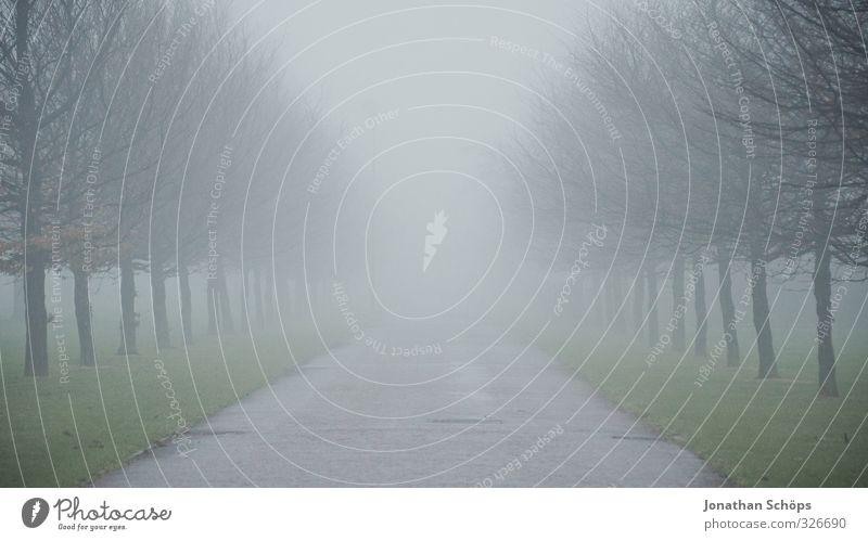 Glasgow fog V Großbritannien Schottland ästhetisch dunkel trist grau Nebel ungewiss unklar verdeckt trüb gruselig kalt Textfreiraum oben Baum Winter kahl
