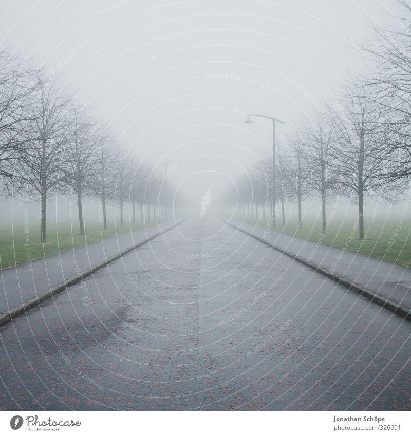 Glasgow fog VI Baum Winter dunkel kalt Wege & Pfade grau Park Nebel trist frei leer Platz ästhetisch Mitte ausdruckslos gruselig