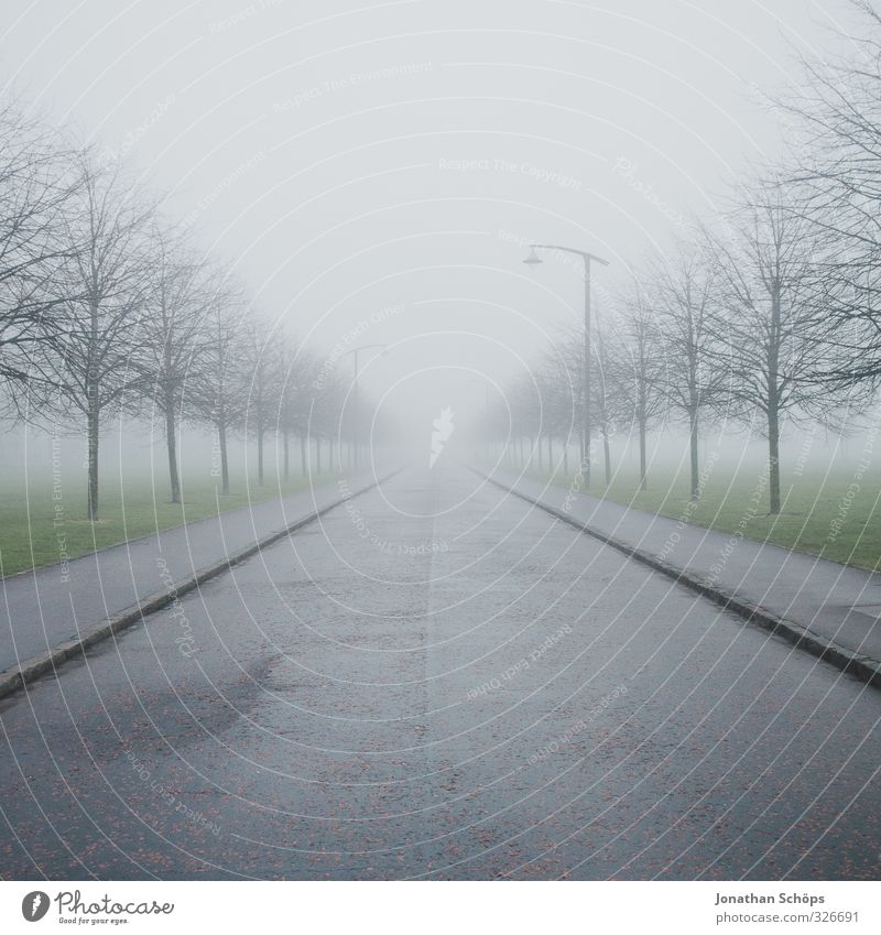 Glasgow fog VI Großbritannien Schottland ästhetisch dunkel trist grau Nebel ungewiss unklar verdeckt trüb gruselig kalt Textfreiraum oben Baum Winter kahl