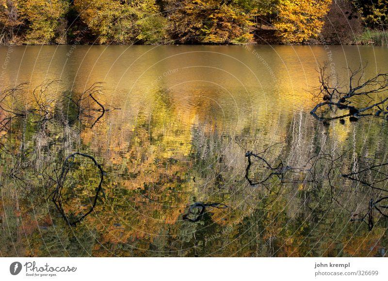 Das Boot des Versprechens Natur grün Wasser Baum Landschaft ruhig Wald Umwelt gelb Herbst Küste braun Schönes Wetter nass Vergänglichkeit Wandel & Veränderung