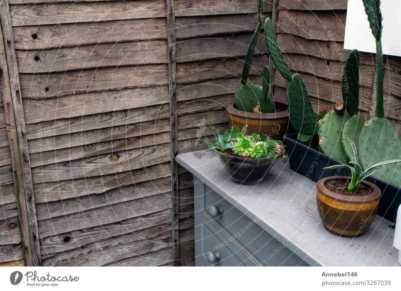 Holzwand mit Kaktuspflanzen in Töpfen auf Schrank, Teller Topf kaufen Design schön Freizeit & Hobby Haus Dekoration & Verzierung Möbel Tisch Küche Natur Pflanze