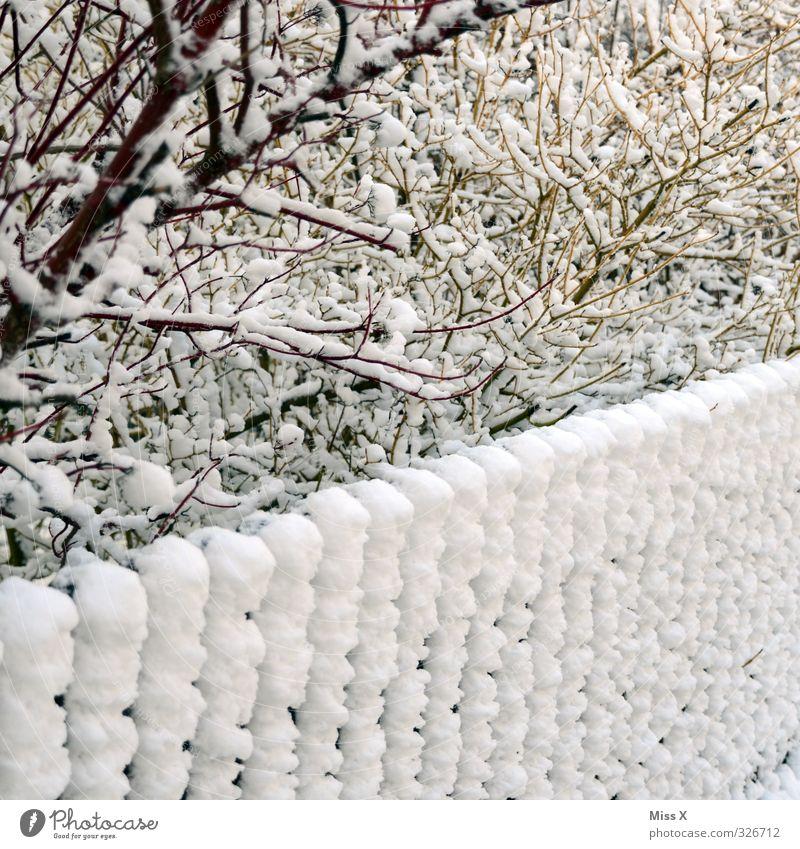 Wintertag Schnee Winterurlaub Eis Frost Schneefall Sträucher Garten kalt Zaun Schneedecke Winterstimmung Ast Zweig Farbfoto Gedeckte Farben Außenaufnahme Muster