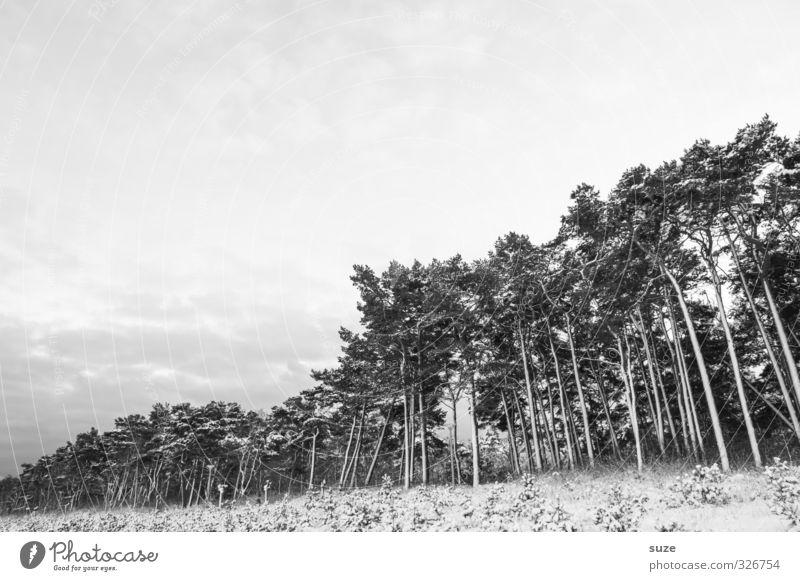 Schwarzweißgrau | am Waldrand Himmel Natur Baum Einsamkeit ruhig Winter kalt Wald Umwelt Traurigkeit Gefühle Schnee Tod Küste Wachstum ästhetisch