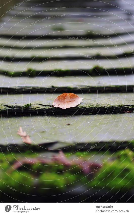 Baumaterial | Schiefer Umwelt Natur Pflanze Herbst Moos Blatt Wildpflanze Dach Stein Holz alt dünn einfach kalt nass natürlich trist braun schwarz Farbfoto