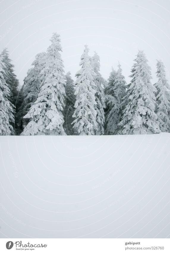 schwarzweißgrau mit Textfreiraum unten Natur Landschaft Winter Wetter schlechtes Wetter Nebel Schnee Schneefall Pflanze Tanne Wald kalt Winterwald Winterschlaf