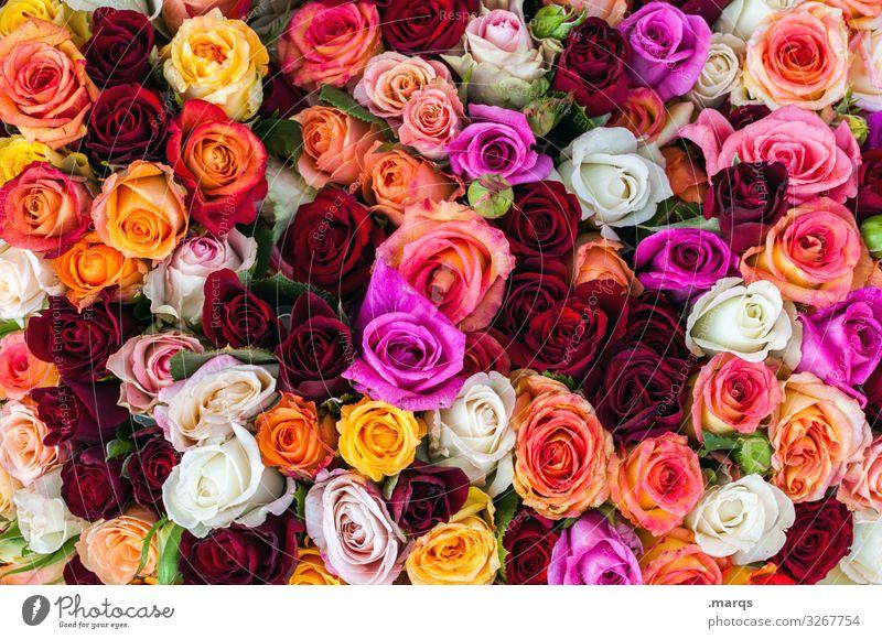 Mit besten Wünschen Feste & Feiern Valentinstag Muttertag Hochzeit Geburtstag Rose Blühend viele gelb orange rosa rot weiß Gefühle Frühlingsgefühle Liebe