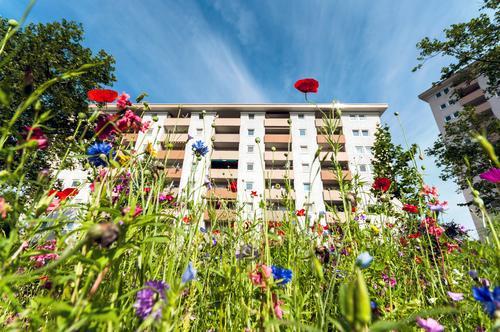 Urban Gardening Mehrfamilienhaus Himmel Sommer Stadt urban Wildblume Natur Nachhaltigkeit wildwiese bunt Urban gardening Innenstadt